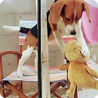 Adopt A Pet :: Terry - San Diego, CA