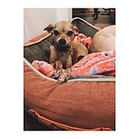 Adopt A Pet :: Priscilla - Orange, CA