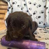 Adopt A Pet :: Royal - Saskatoon, SK