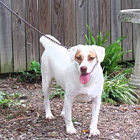 Adopt A Pet :: MILLIE - Hartford, CT