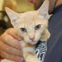 Adopt A Pet :: Einstein - Brooklyn, NY
