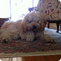 Adopt A Pet :: FL - Beckett - Boca Raton, FL