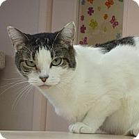 Adopt A Pet :: Daria - St. Petersburg, FL