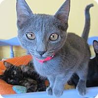 Adopt A Pet :: Meep - Mobile, AL