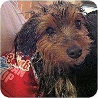 Adopt A Pet :: Mila - Fairfax, VA