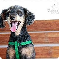 Adopt A Pet :: Pepper - Albany, NY