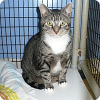 Adopt A Pet :: Elvin - Colmar, PA