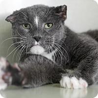Adopt A Pet :: Friar Tuck - Chicago, IL