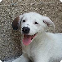 Adopt A Pet :: Zack*ADOPTED!* - Chicago, IL