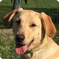 Adopt A Pet :: Swiss - Vacaville, CA