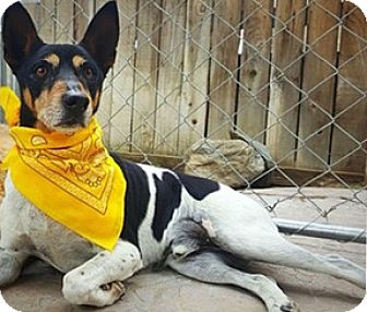 Cattle Dog Mix Dog for adoption in Winchester, California - Bruiser