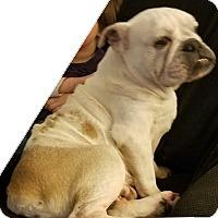 Adopt A Pet :: Penelope - Orlando, FL