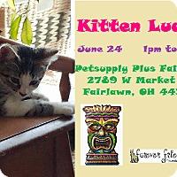 Adopt A Pet :: MINNIE - Northfield, OH