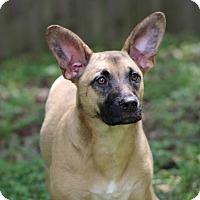 Adopt A Pet :: Lizzy - Millersville, MD