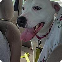 Adopt A Pet :: Rogue - Princeton, MN