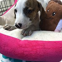 Adopt A Pet :: Kendra - Greensboro, GA