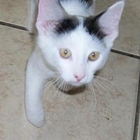Adopt A Pet :: Parker - Lacon, IL