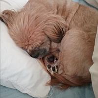 Adopt A Pet :: Quintus Harris - Houston, TX