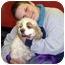 Photo 2 - Cocker Spaniel Dog for adoption in New Philadelphia, Ohio - Kimi - Help