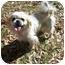 Photo 2 - Pekingese/Shih Tzu Mix Dog for adoption in Harvard, Massachusetts - Holly - 10 pounds!