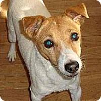 Adopt A Pet :: Missy **No fee adoption! - Leesport, PA