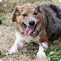 Adopt A Pet :: Abigail - Hagerstown, MD