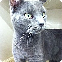 Adopt A Pet :: Shelton - Riverhead, NY