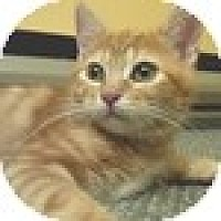 Adopt A Pet :: Clementine - Vancouver, BC