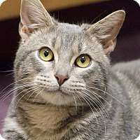 Adopt A Pet :: Hardee - Chicago, IL