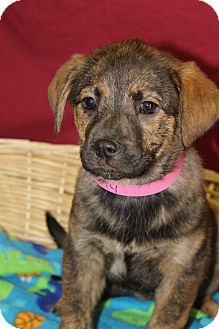 Shepherd (Unknown Type) Mix Puppy for adoption in Waldorf, Maryland - Sally