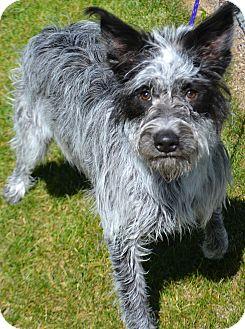 Australian Cattle Dog Mix Dog for adoption in Fruit Heights, Utah - Oscar