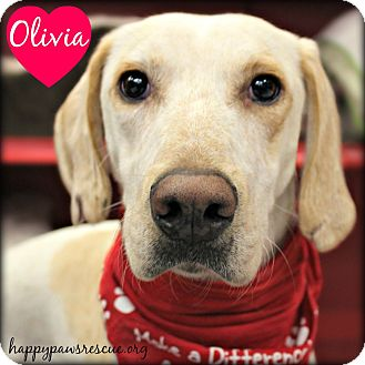 Pointer/Hound (Unknown Type) Mix Dog for adoption in South Plainfield, New Jersey - Olivia