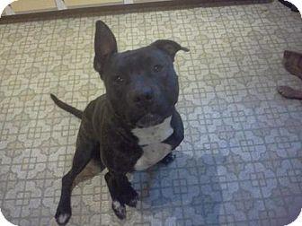 Pit Bull Terrier Dog for adoption in Tyrone, Pennsylvania - Kane