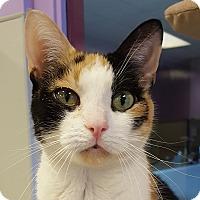 Adopt A Pet :: Selina - Grayslake, IL