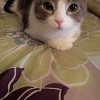 Adopt A Pet :: Sigurd - Milwaukee, WI