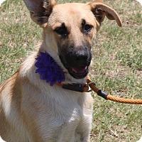 Adopt A Pet :: Giselle - Lacey, WA