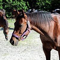 Adopt A Pet :: Roaney - Southwest Ranches, FL