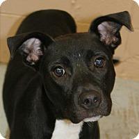 Adopt A Pet :: Wilbur - Hilton Head, SC
