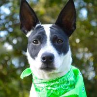 Adopt A Pet :: Lexie - Lafayette, LA