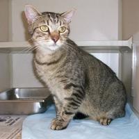 Adopt A Pet :: Bugsy - Fairfax Station, VA