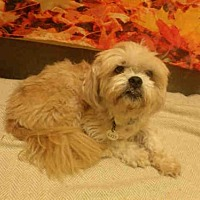 Adopt A Pet :: *STEFON - Upper Marlboro, MD