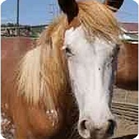 Adopt A Pet :: Cheyenne - Durango, CO