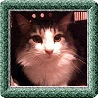 Adopt A Pet :: Cedrick - Jacksonville, FL