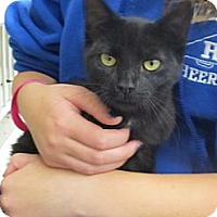 Adopt A Pet :: DJ - Riverhead, NY