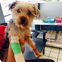 Adopt A Pet :: Mila - Suwanee, GA