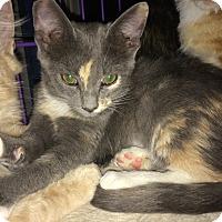 Adopt A Pet :: Penelope - San Ramon, CA