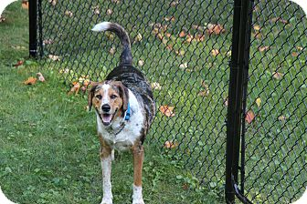 Hound (Unknown Type) Mix Dog for adoption in Colborne, Ontario - Boone
