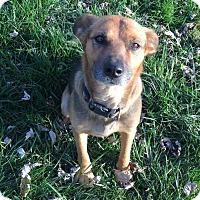 Adopt A Pet :: Mo - Providence, RI