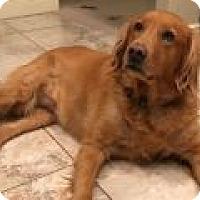 Adopt A Pet :: Lexi - Denver, CO