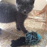 Adopt A Pet :: Steve - Sterling Hgts, MI